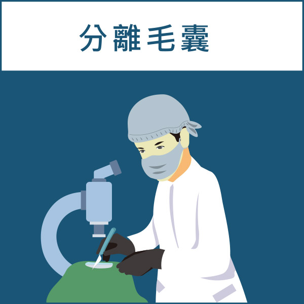 FUT植髮手術過程(顯微鏡下分離毛囊)